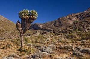 kilimanjarofauna